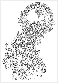 peacock coloring pages for adults - Google Search