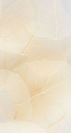 Hintergrund beige delicate textures and tone in tone colors Beige Wallpaper, Flower Wallpaper, Screen Wallpaper, Textures And Tones, Textures Patterns, Nature Iphone Wallpaper, Instagram Background, Backgrounds Free, Cute Wallpapers