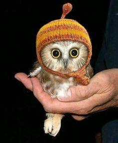 Adorable baby owl