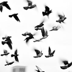 #photography #blackandwhite #instagood #igers #instadaily #art #artist #birds #film