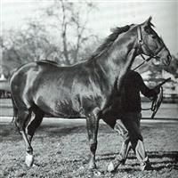 Pensive - 1944 Kentucky Derby Winner by Hyperion Barrel Racing Saddles, Barrel Racing Horses, Horse Saddles, Horse Racing, Race Horses, Horse Halters, Warmblood Horses, Clydesdale Horses, Thoroughbred Horse
