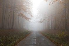 Outono, Floresta, Névoa, Caminho