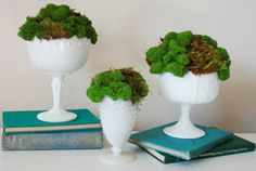 #Moss and #milk #glass