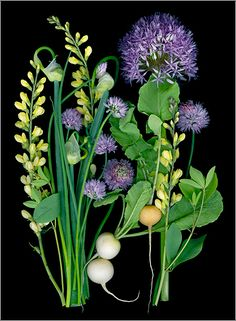 Trout Lily Farm Allium and Radishes - Scanner Photography By Ellen Hoverkamp