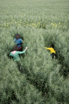 Field frolicking