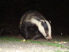 Panoramio - Photos by Micsa Bucknell Creatures, Nature, Photos, Animals, Beautiful, Naturaleza, Animales, Animaux, Animal Memes