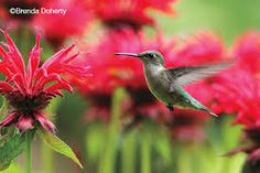 Image result for canada wildlife photography