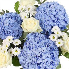 Summer Boy flower delivery gift service UK #hydrangea #summerflowers #flowers #white #blue #flowerdelivery #serenataflowers