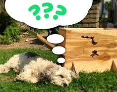 BALL KATAPULT FÜR KLEINE UND GROSSE HUNDE! STELLE KAWOOF GANZ AUF DIE BEDÜRFNISSE DEINES HUNDES EIN. Durch die 4 verschieden starken Stufen des Ball Katapultes, können auch schon kleine Hunde ab 5kg Körpergewicht mit KaWoof spielen und trainieren. #ball #launcher #dogs #dog #toy #spielzeug #training #hunde #bordercollie #puppy #wood #design #kawoof