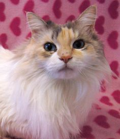 Tabitha's found her forever home! <3