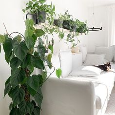 Tamara (@my_green_home_and_me) • Instagram-Fotos und -Videos Videos, Green, Plants, Instagram, Home, Planters, Video Clip, Haus, Plant