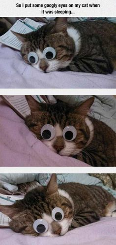 So I Put Googly Eyes On My Cat When It Was Sleeping cute animals cat cats adorable animal kittens pets kitten funny pictures funny animals funny cats Funny Animal Pictures, Funny Images, Funny Animals, Cute Animals, Random Pictures, Funny Pics, Funny Videos, Funny Jokes, Hilarious