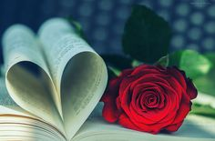 Vintage rose by Natasha Busel on Love Wallpaper Backgrounds, Wallpaper Nature Flowers, Rose Flower Wallpaper, Beautiful Flowers Wallpapers, Flower Backgrounds, Pretty Wallpapers, Romantic Backgrounds, Love Rose Flower, Beautiful Rose Flowers