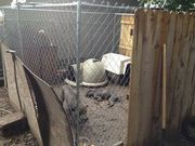 Authorities found one dead pit bull and one clinging to life at a home on E. 28th Street in Paterson Wednesday morning.