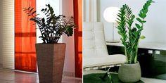 Best Way to Get Indoor and Outdoor Plants in NYC