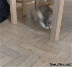 Eek! It Moves!