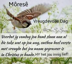 Good Morning Good Night, Good Morning Wishes, Good Morning Quotes, Lekker Dag, Evening Greetings, Goeie Nag, Goeie More, Afrikaans Quotes, Special Quotes