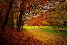 Here comes fall! We hope you're ready for a beautiful ride because the foliage on Long Island is to die for. Give us a call to book your next ride! 631-225-1122