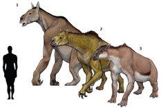 Prehistoric taxonomie | Chalicotherium goldfussi(1833) Moropus distans...