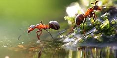 Mutfağınızdaki Karıncalardan  Kurtulun!