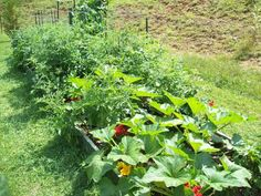 Mike and Lisa's World: Gardening
