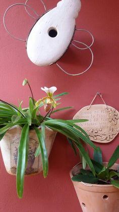 sapatinhos - orquidea