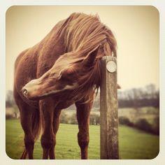 dj horse