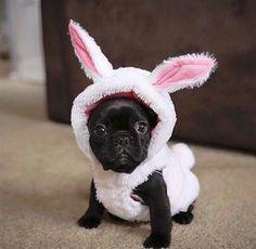 Tooo cute!!!