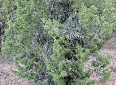 How To Make a Ghillie Suit   Prepper Guides UK
