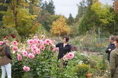 garden to vase_lowrez_web_claredayflowers_kellybrown22.jpg