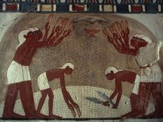 Separation of the Grain and Chaff This painting in the Tomb...