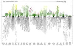 Drought tolerant plants attract birds and butterflies! Drew Lathin of Creating Sustainable Landscapes LLC showed this eye-opening graphic at a free lecture I attended. Buffalo grass is a no-mow no-water lawn option that is nearly native to Michigan.