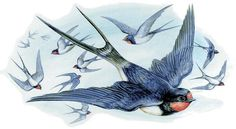 Pencil Drawings Of Animals, Bird Drawings, Pebble Pictures, Bird Pictures, Golondrinas Tattoo, Swallow Tattoo Design, Sparrow Tattoo, Bird Crafts, Sea Birds