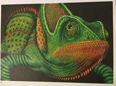 No 22 Rebeca Jimenez Jimenez Chameleon