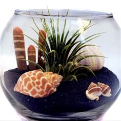 Sealife Terrarium with Air Plant - All For Herbs And Plants Green Plants, All Plants, Indoor Plants, Purple Sea Urchin, Sea Urchin Spines, Air Plant Terrarium, Terrarium Ideas, Swedish Decor, Air Plant Display