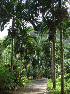 Tropical Gardens of Maui; Iao Valley Road, Wailuku Maui, The sight for my bestselling novel, THE DREAM JUMPERS PROMISE available on Amazon for $2 download http://amzn.com/B00AA4FAJC