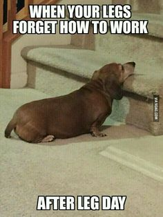 This is how I felt today when I had to go upstairs in my houselol