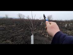 Cea mai simpla formare a pomilor de visini. UTIL PENTRU INCEPĂTORI - YouTube Mai, Youtube, Video Clip, Youtubers, Youtube Movies