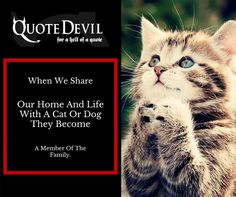 Cheap Pet Insurance in Ireland for your beloved animals at Quote Devil! We offer cheap Dog insurance with the best medical care for your pets. Pet Insurance Quotes, Cheap Pet Insurance, Cat Insurance, Medical Care, When Us, Your Pet, Dog Cat, How To Become