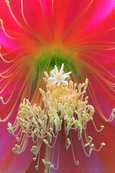 Orchid Cactus by T Beautiful gorgeous pretty flowers