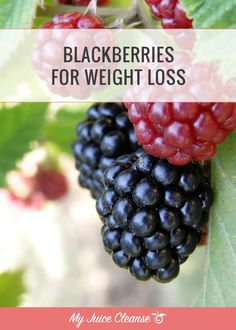 Blackberries for Weight Loss - My Juice Cleanse
