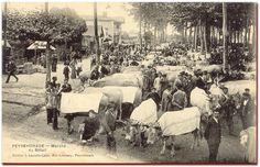 peyrehorade, LES LANDES - Marché au bétail