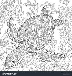 Resultado de imagen de zentangle turtle