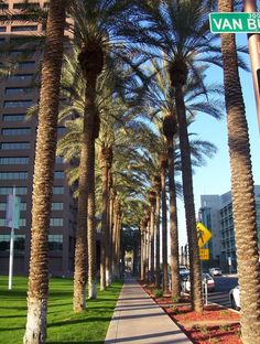 Downtown Phoenix, AZ How can you not love palm trees!