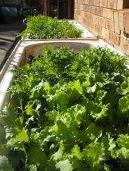 Small Garden Ideas - Successful Small Vegetable Gardens