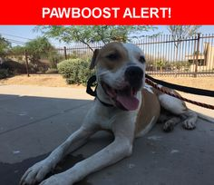 Is this your lost pet? Found in Phoenix, AZ 85029. Please spread the word so we can find the owner!  Found with a black leashed tied around neck   Near N 19th Ave & Cactus