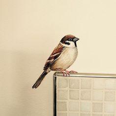 @mus @sparrow