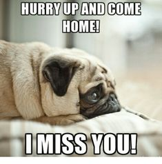 """101 Sincere """"I Miss You"""" Memes to Share with People You Love and Miss - 101 I miss you memes – """"Hurry up and come home! I miss you! Love Memes For Him, I Miss You Quotes For Him, Love You Meme, Missing You Quotes For Him, Miss You Funny, Funny Love, I Miss You Memes, I Miss You Cute, Miss My Best Friend"""