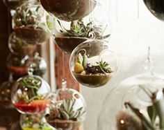 Indoor Botanical Installations