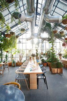 Commissary restaurant and cocktail bar in Los Angeles / photo by Leslie Santarina Cafe Bar, Cafe Restaurant, Greenhouse Restaurant, Greenhouse Cafe, Greens Restaurant, Restaurant Design, Luxury Restaurant, Restaurant Lighting, Cafe Interior